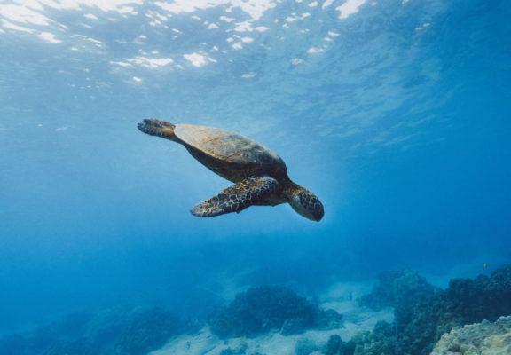 pollution marine tortue jakob owens lq